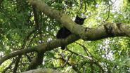 Kat loopt dubbele breuk in achterpoot op na zesdaags avontuur in boom