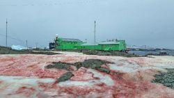 Bizar fenomeen op Antarctica: sneeuwlandschap kleurt bloedrood