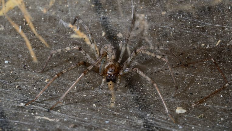 Zijn er dit jaar echt meer spinnen dan anders? | Dieren ...