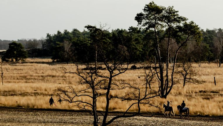 Nationaal Park De Loonse en Drunense Duinen Beeld anp