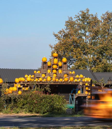 Oranje gloed van pompoenen langs de weg