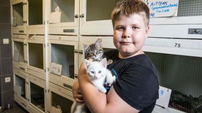 Gezocht: pleeggezinnen voor kittens