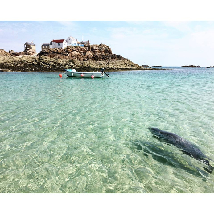 Zeehond Barbara zwom vanaf Stellendam helemaal naar de Kanaaleilanden.