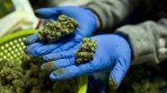 Elf ton cannabis in beslag genomen in Frankrijk