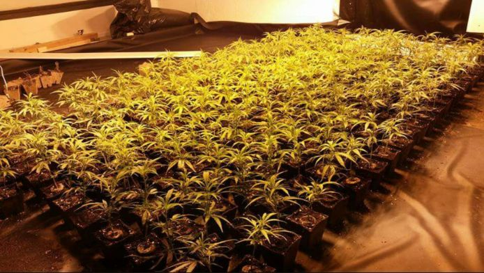 In totaal werden 208 wietplantjes aangetroffen in de bovenwoning.