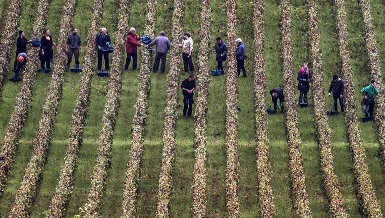 Wijnranken in Bourgondië. Naar verwachting valt de druivenoogst zo`n 30 procent lager uit dan vorig jaar. Beeld null