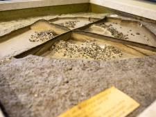 Zeven 'vergeten' grafheuvels opgeknapt bij het Hulsbeek
