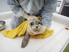 A Seal opent kliniek voor zeehonden