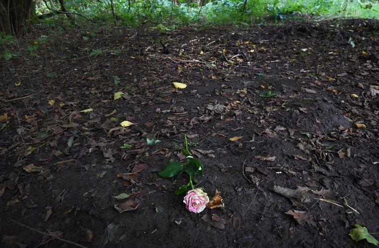 Een roos in de bossen waar het lichaam van Anne Faber is gevonden. Beeld Marcel van den Bergh / de Volkskrant