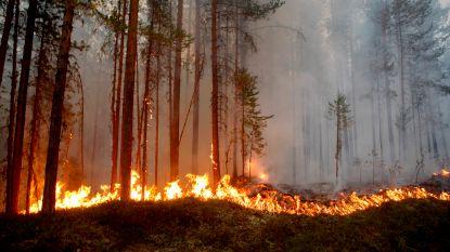 Zweden getroffen door tientallen bosbranden