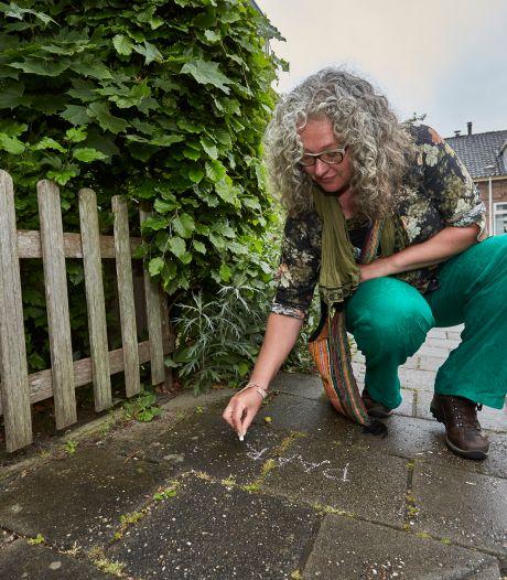 Krijtende plantengids maakt Zutphenaren bewust van natuur in eigen straat
