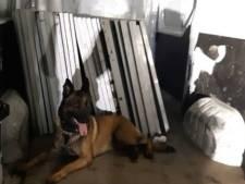 Politiehond grijpt man uit Yerseke bij diefstal van zonnepanelen