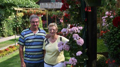 Bloemenpracht in 't Voskeshof: Meer dan 500 bloeiende planten en tips voor groene vingers