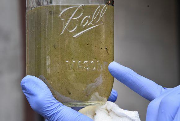 Een professor houdt een glazen pot met water vast waar mogelijk microplastics inzitten.