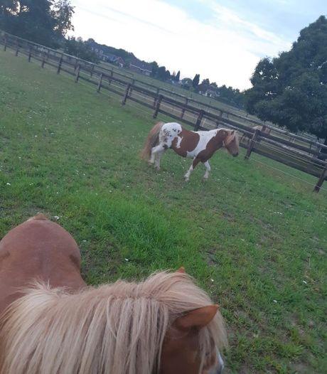Pony kwijt? Klik hier