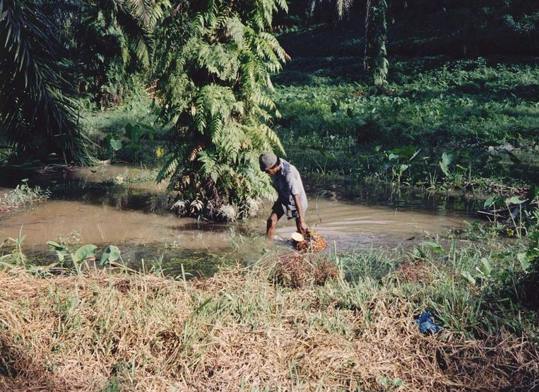 Voor winning van olie worden bossen gekapt Beeld anp