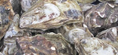 Man loopt mogelijk hoge boete op voor oesters plukken in Ritthem