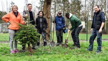 Kerstbomen krijgen tweede leven dankzij Go! Talent