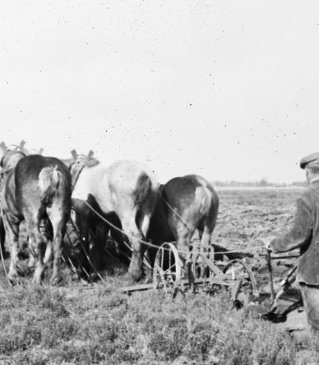 Alphons Bouwman, een kleine man verdwaald; De kleine boer trekt aan het kortste eind