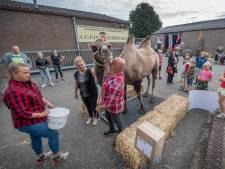 Even wegen: heeft Farah de kameel corona-kilo's?