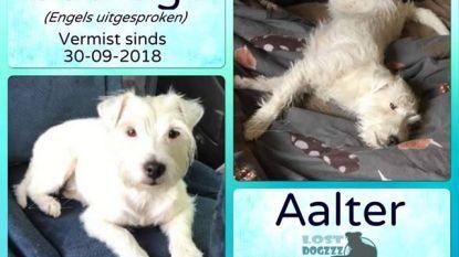 Weggelopen hondje gespot in Boerestraat