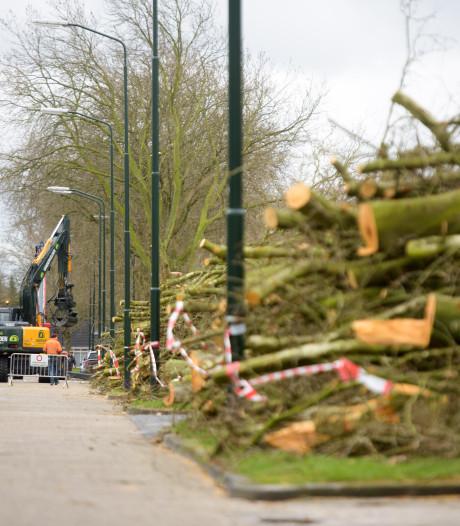Gemeenteraad: 'Wel bomen in Budel, maar voor minder geld'