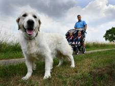Hondenbelasting Geldermalsen verdwijnt in West Betuwe