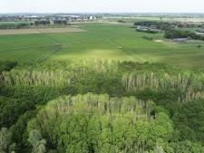 Het 'vals essenvlieskelkje' zorgt voor massale bomensterfte in Macharens bos