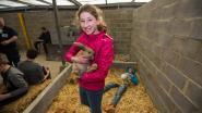 Van koeien melken tot kruiwagenrace: 650 leerlingen maken kennis met PIBO