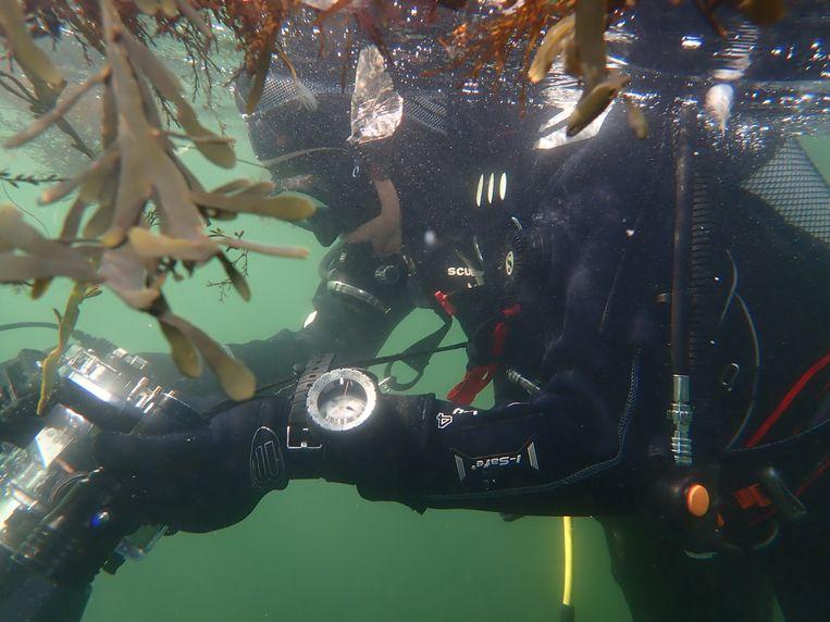 Elspeth Diederix tijdens het duiken. Beeld null