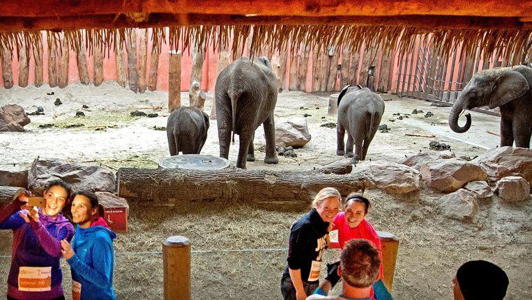 Deelnemers nemen een selfie met de olifanten. Beeld Klaas Jan van der Weij / de Volkskrant