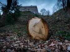 Arnhem wil 'heel goede compensatie' voor bomenkap Onderlangs
