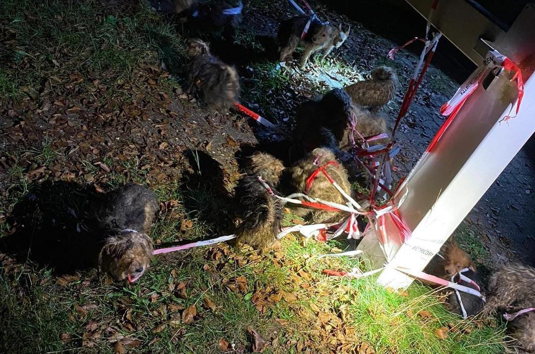 De politie trof 17 verwaarloosde honden aan bij de Apeldoornseweg in Arnhem.
