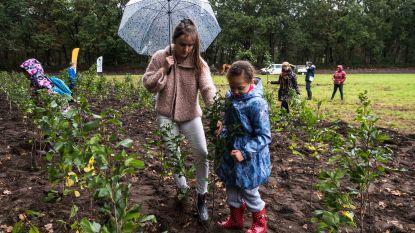 IN BEELD: Lommelse scholen helpen bij planten van 7.000 bomen