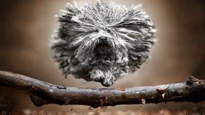 Fotograaf maakt prachtige foto's van springende honden