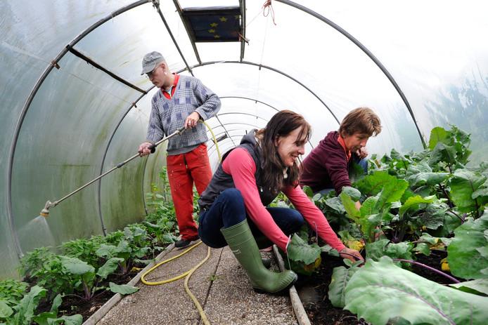 Bij De Viermarken worden veel soorten groentes verbouwd.