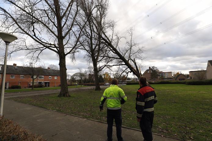 Boom omgewaaid in de Grote Beerlaan in Eindhoven