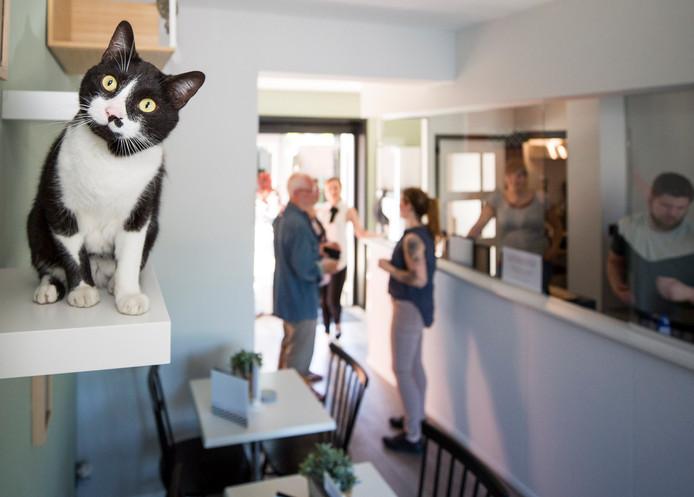 Opening van het eerste Zeeuwse kattencafé in Goes.