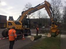 Reconstructie Birgittinessenstraat Uden start met kappen en verplanten bomen