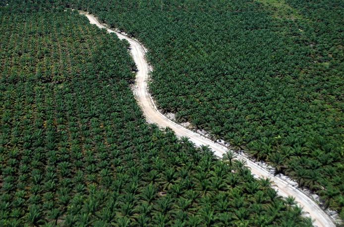 Het oosten van het Indonesische eiland Sumatra is de grootste leverancier van palmolie van het land.