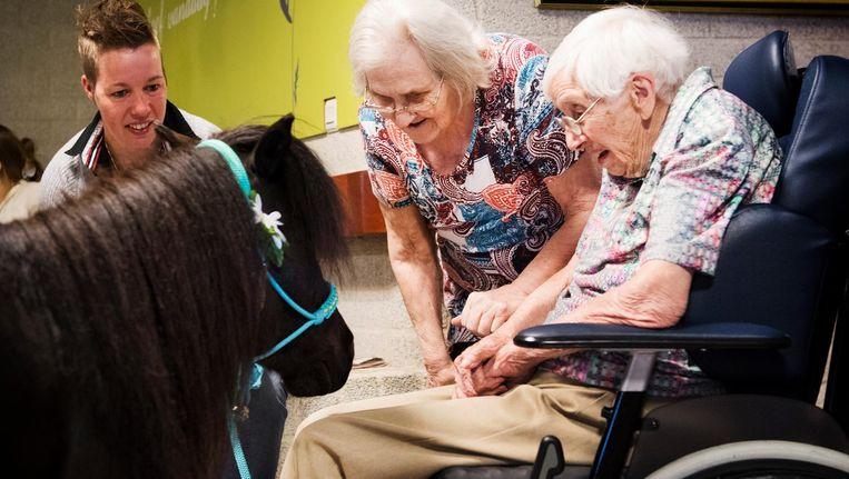 In woonzorgcentrum P.W. Janssen in Deventer krijgen dementerende ouderen bezoek van een 'therapiepaard'. Het dier moet ervoor zorgen dat de ouderen iets meekrijgen van de wereld buiten het woonzorgcentrum. Beeld anp