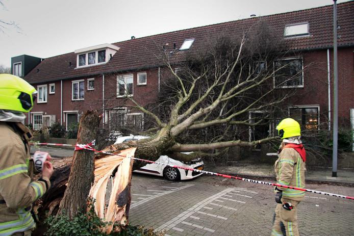 Een boom valt om in Rotterdam