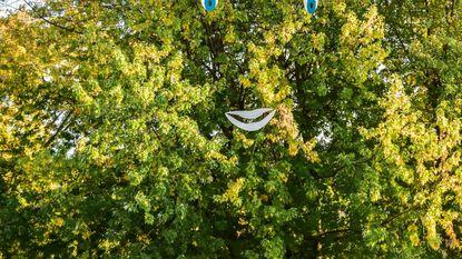 Stadslijst geeft te rooien boom een gezicht