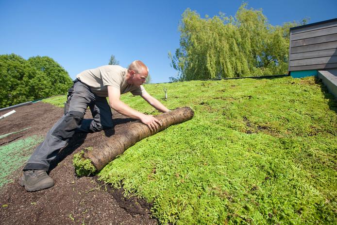 Een sedumdak isoleert en houdt regenwater langer vast.