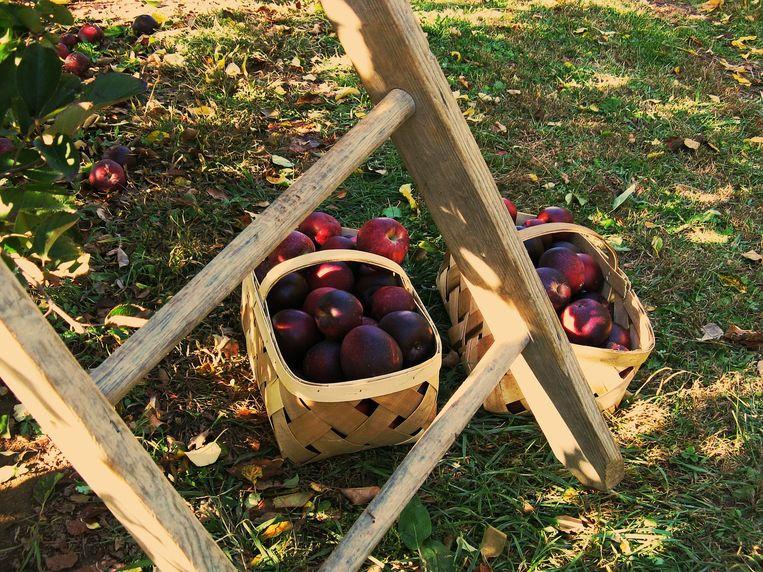 Net geplukte appels.