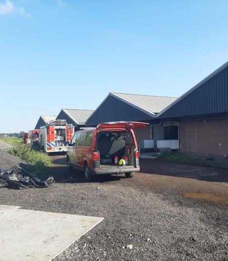 Twintig varkens omgekomen bij een grote brand in stallen bij Poortvliet