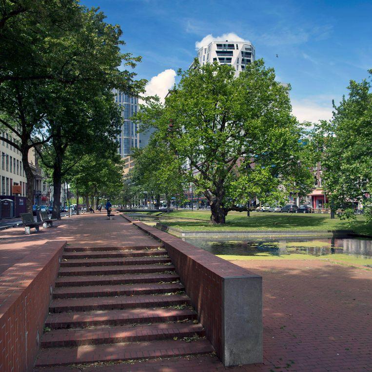 Nederland, Rotterdam, 12 juni 2017. Breytenbachboom, Rotterdam. Foto: Werry Crone Beeld Werry Crone