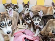 Gelderlander Nieuwscafé: Jonge hondjes, herindeling en discriminatie
