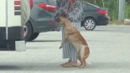 """""""Je hangt je hond op!"""": vrouw opgepakt voor mishandeling hond na deze virale video"""