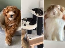 Van konijn Fluffy tot hond Rebel: deze Amersfoortse huisdieren zijn beroemd op Instagram!